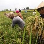 Farmers working in the fields